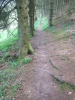 Welsh rooty climb