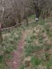Welsh singletrack descent